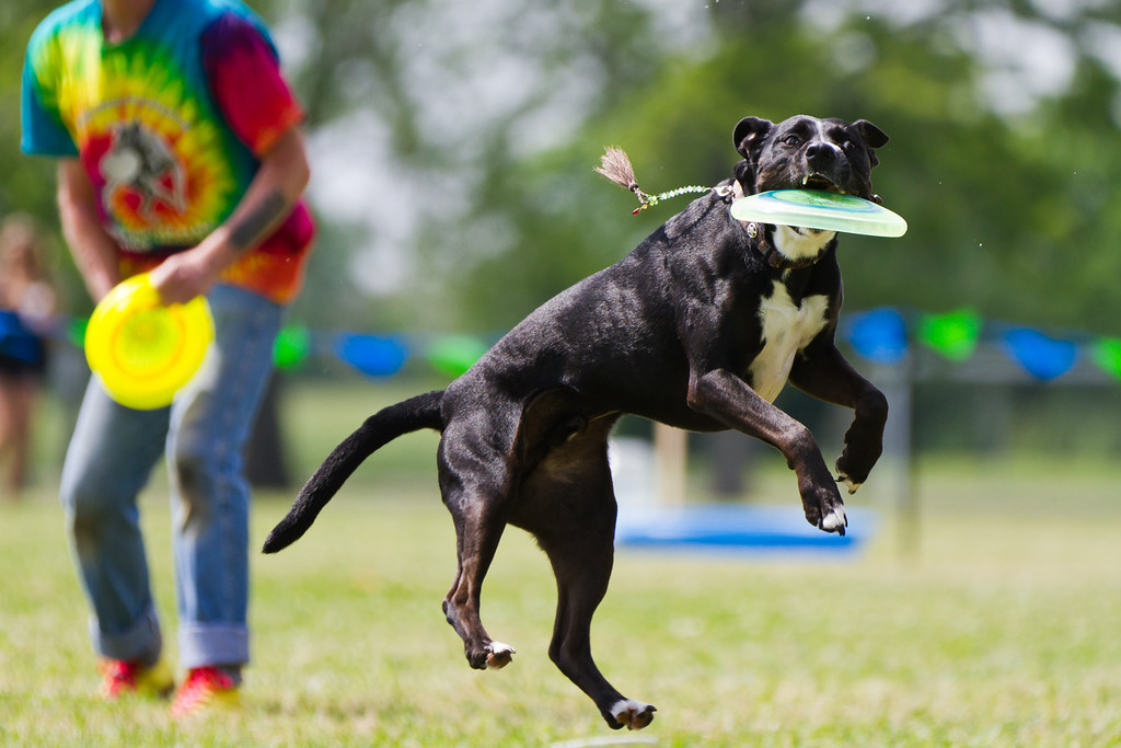 IMAGE: http://alfredomora.smugmug.com/Events/Paws-in-the-Park-2012/i-4TCZ7r2/0/XL/20120331-Paws-in-the-Park-020-XL.jpg