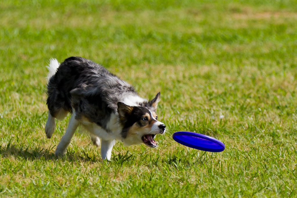 IMAGE: http://alfredomora.smugmug.com/Events/Paws-in-the-Park-2012/i-jQfwHzB/0/XL/20120331-Paws-in-the-Park-038-XL.jpg